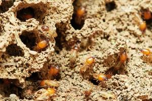 termites-3367350_1280